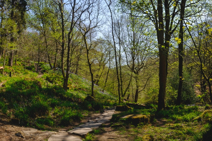 Spring at Hardcastle Crags with the X100T