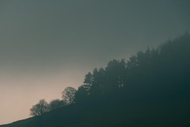 Daisy Bank in the Fog